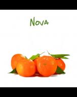 Mandarini Nova Sicilia, vendita online