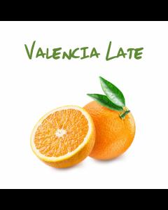 Arancia Bionda Valencia Late